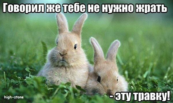 post-25888-0-41839200-1474447407_thumb.jpg