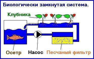post-17980-0-31262000-1382091541_thumb.jpg