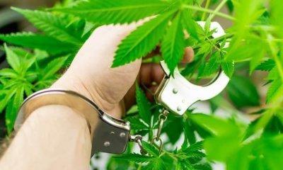 cannabis-factory-228(1).jpg
