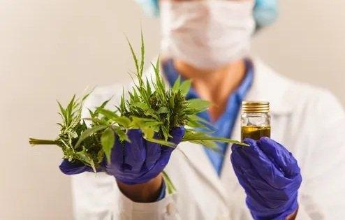 cannabis-access-new-zealand.jpg