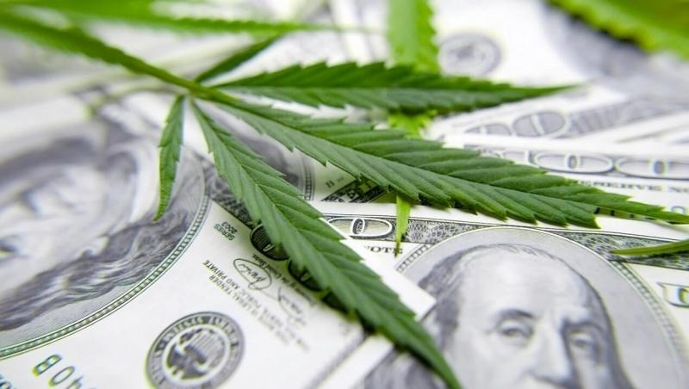 cannabis-grow-profit-ca(1).jpg