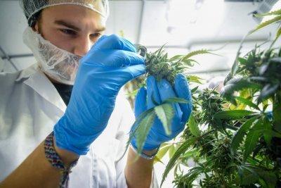cannabis-horticulture(1).jpg