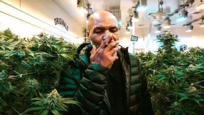cannabis-tyson.jpg