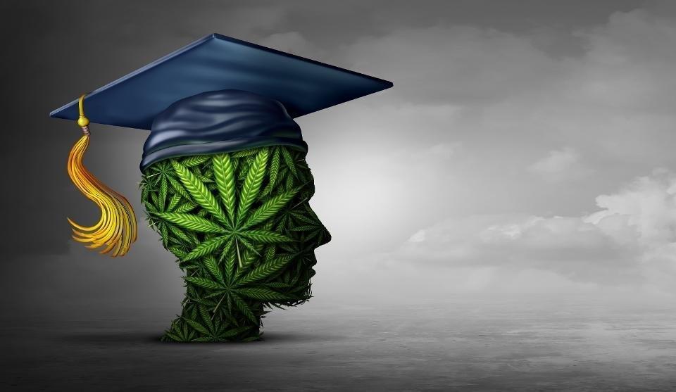 new-zealand-cannabis-education.jpg