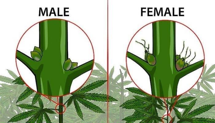 male-female.jpg