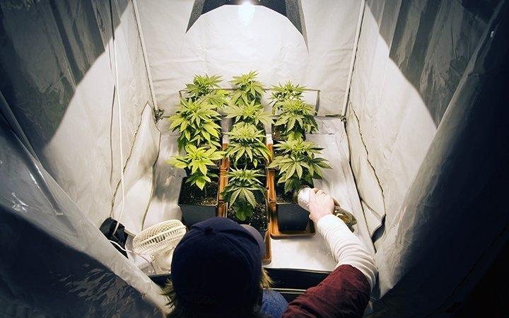 canada-cannabis-survey-2020.jpg