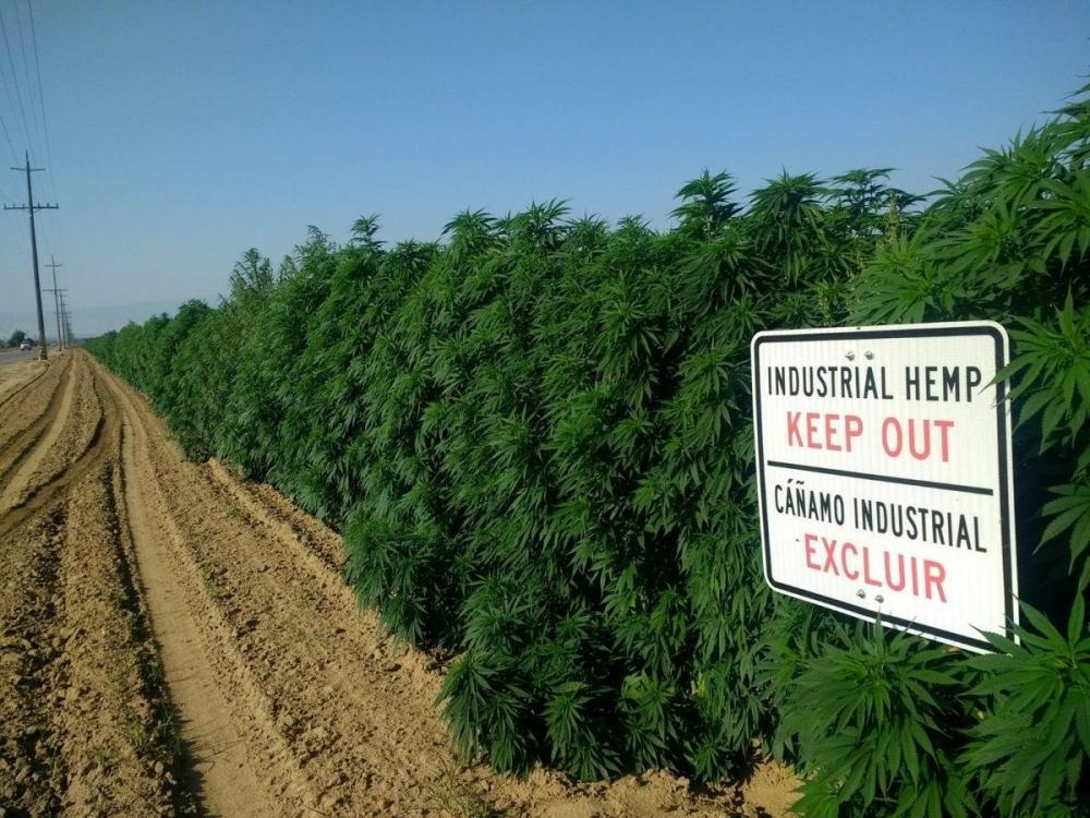 hemp-grow-california.jpg