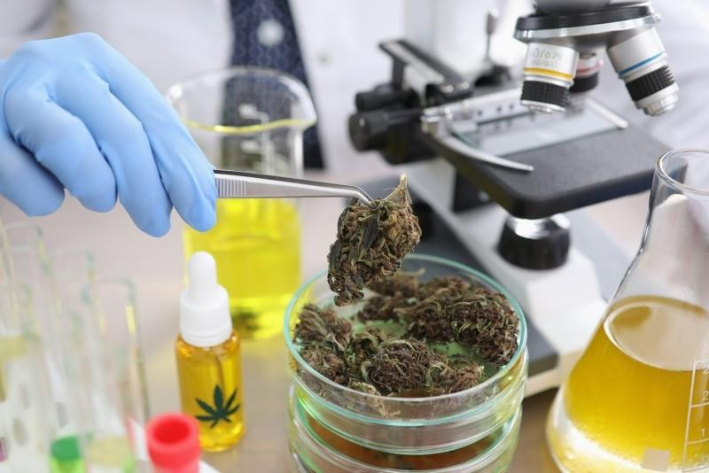 cannabis-research.jpg