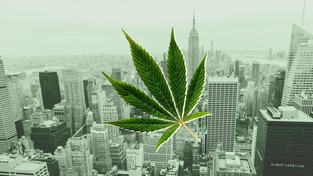 new-york-cannabis-give-away.jpg