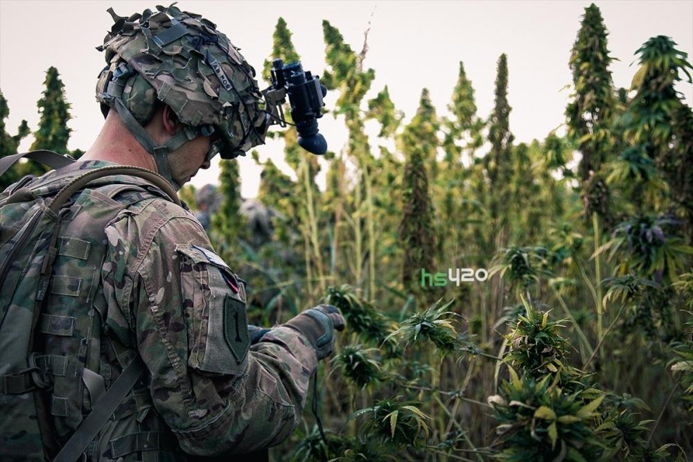 cannabis-army(1).jpg