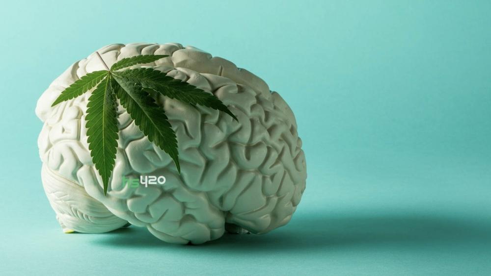 cannabis-brain(2)(1).jpg