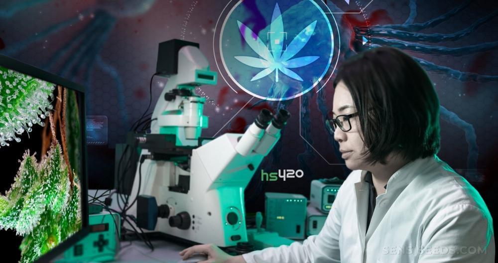 cannabis-cancer-research(1).jpg