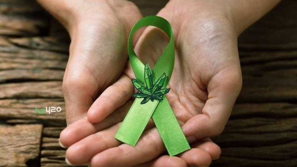 cannabis-mushroom-drug-cancer(1).jpg