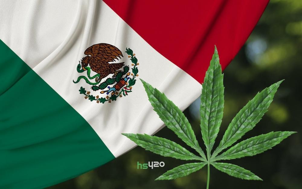 mexico-cannabis-march(1).jpg