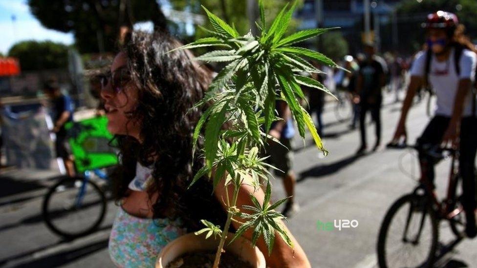 mexico-cannabis-march-activist(1).jpg