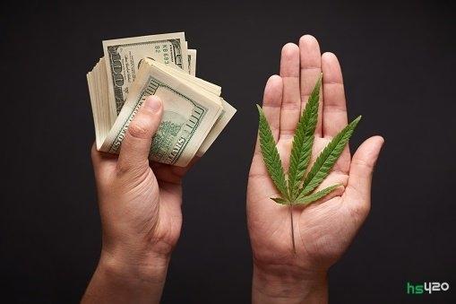 cannabis-money (1).jpg