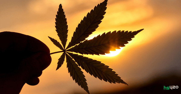 cannabis-assosiation-motivation (1).png