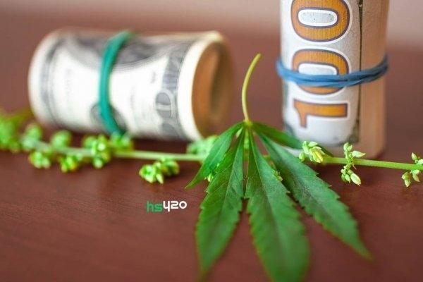 cannabis-money(1) (1).jpg