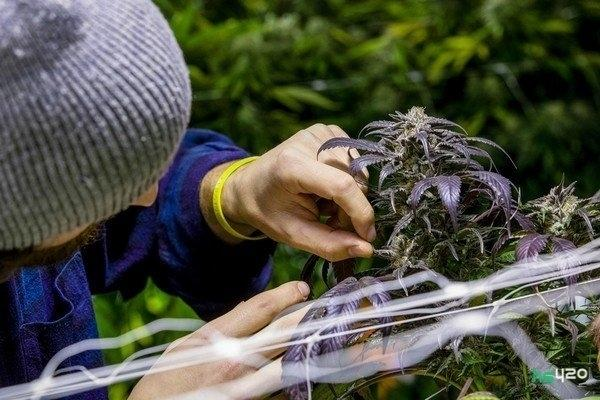 cannabis-teens-motivation (1).jpg