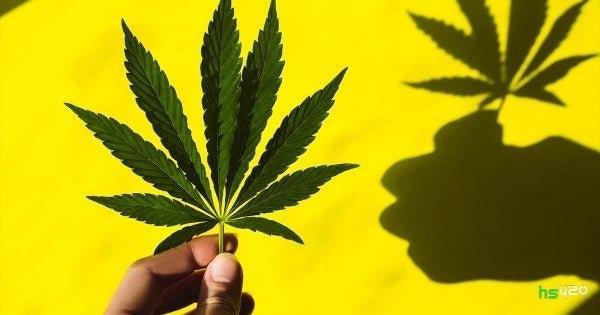 cannabis-legal-consequences(1).jpg