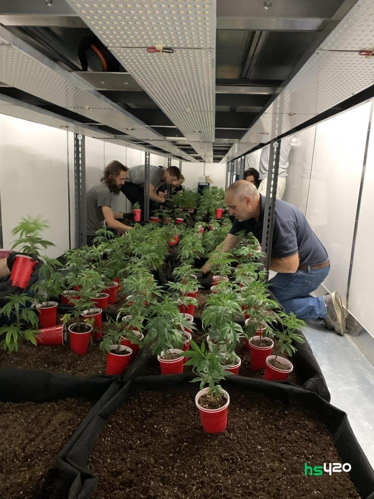 canada-cannabis-microfarm (1).jpg