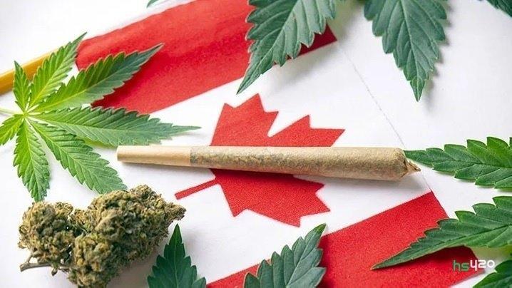 canada-cannabis-microgrow (1).jpg