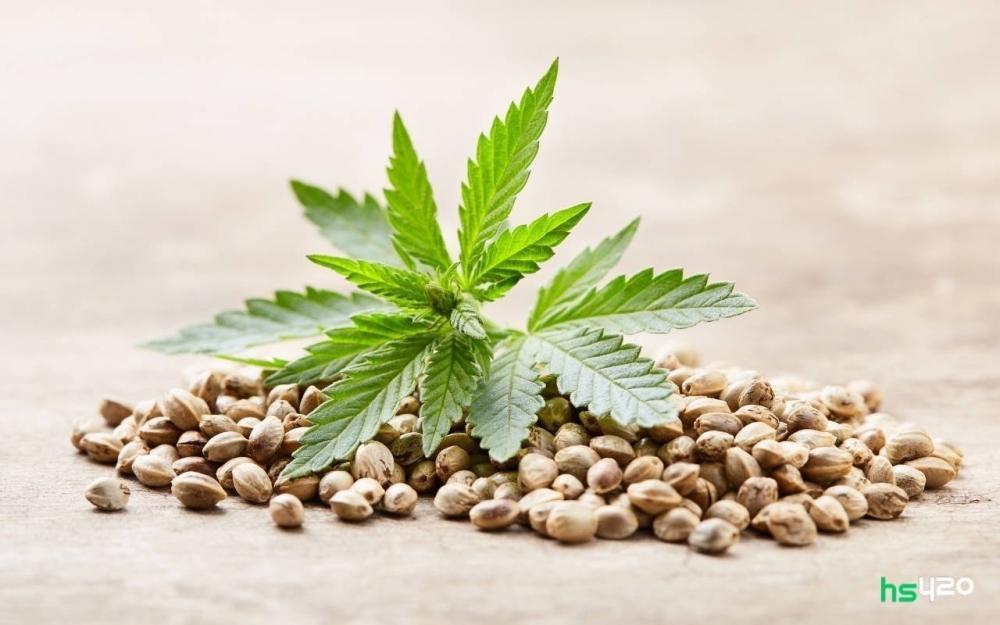 cannabis-seeds-seized-record-germany-2.jpg