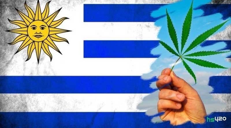 cannabis-uruguay-tourists-2.jpg