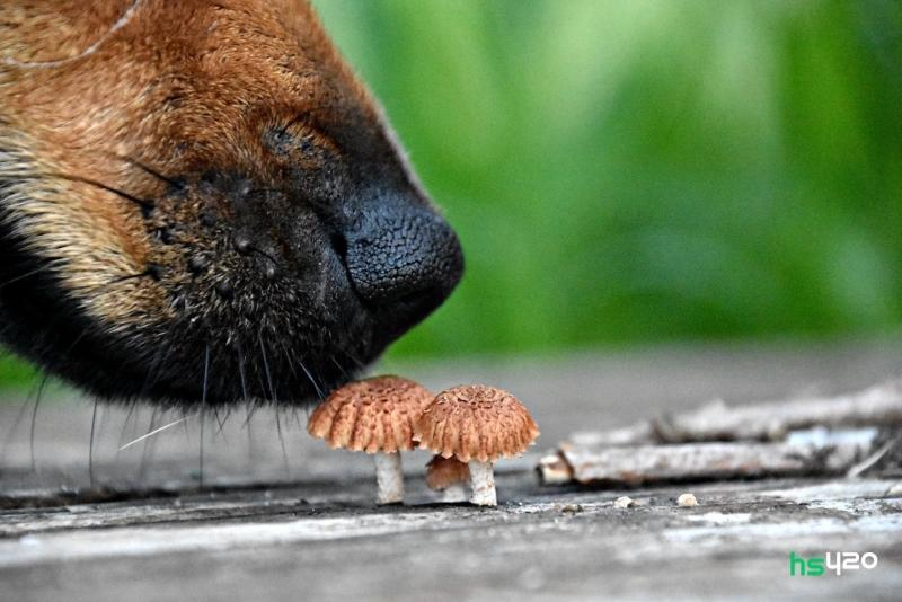 dogs-mushrooms-2.jpg