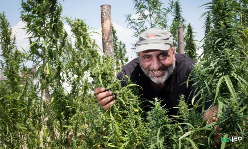 italy-cannabis-farmer-2.jpg