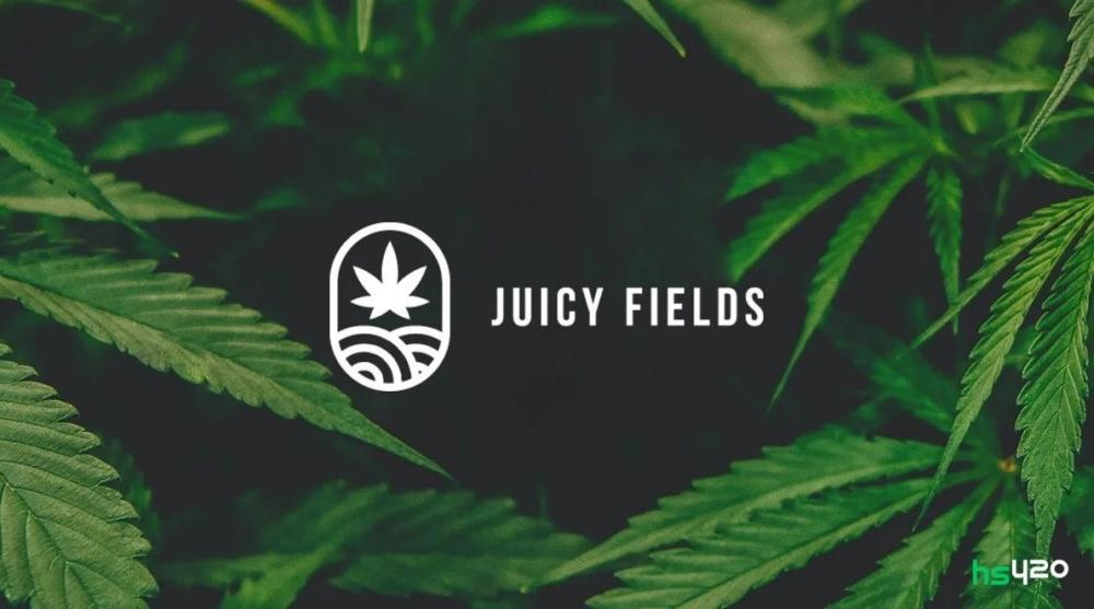 juicyfields-cannabis-harvest-2.jpg