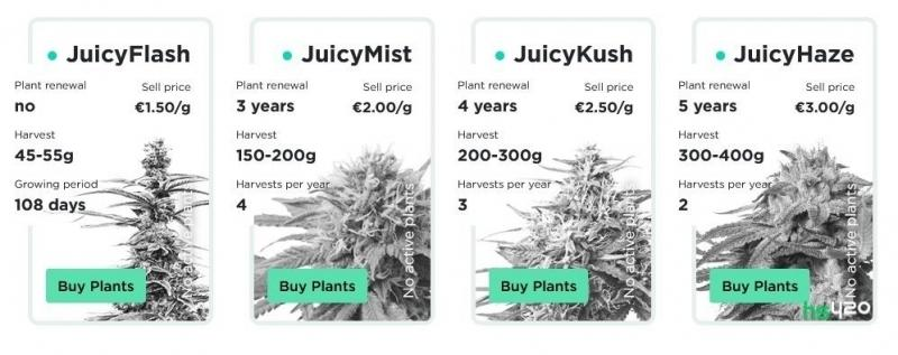 juicyfields-cannabis-strains-2.jpg