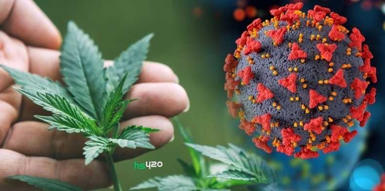 cannabis-hplvd-us (1).jpg